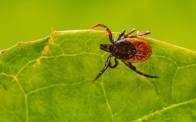 Chiropractic Care and Lyme Disease